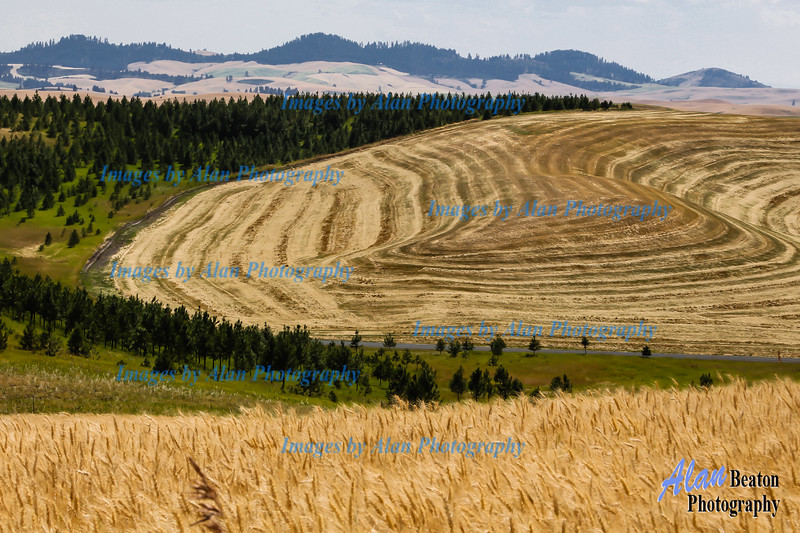 Contoured landscape