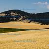 Harvest landscape;