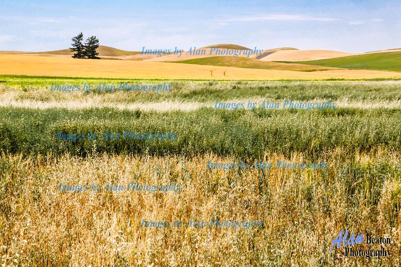 Colourful harvest landscape