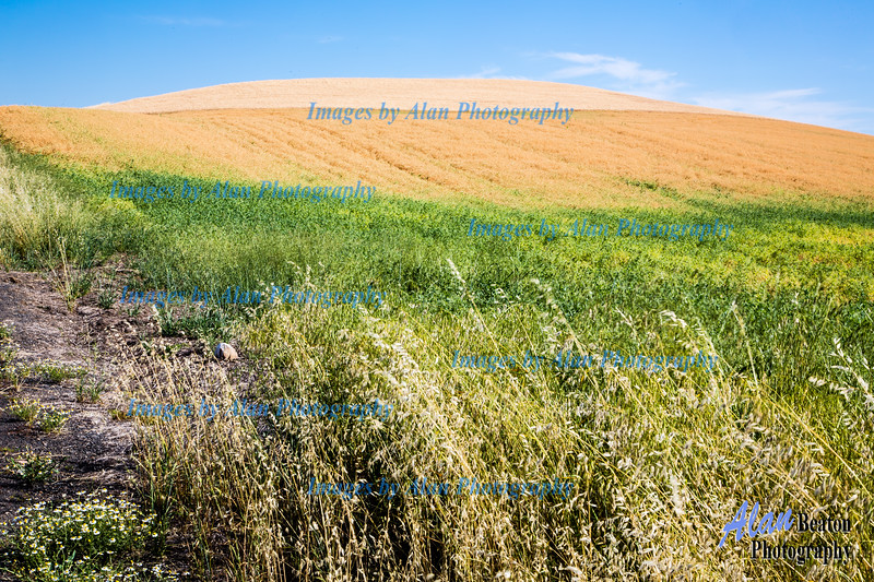 Colourful Palouse harvest landscape