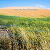 Colourful Palouse harvest landscape