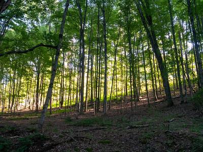 Abington Trail in Lackawanna State Park
