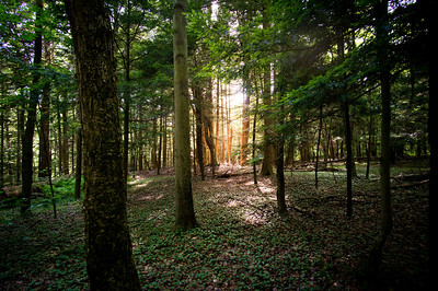 Sometimes the light comes through the trees in such a way it looks like magic!
