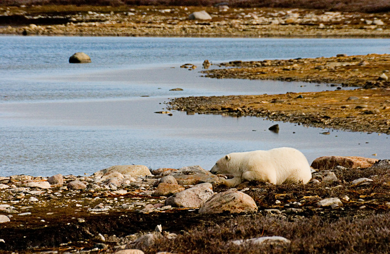 <center>Resting by the Shore  <br><br>Churchill, Manitoba, Canada</center>
