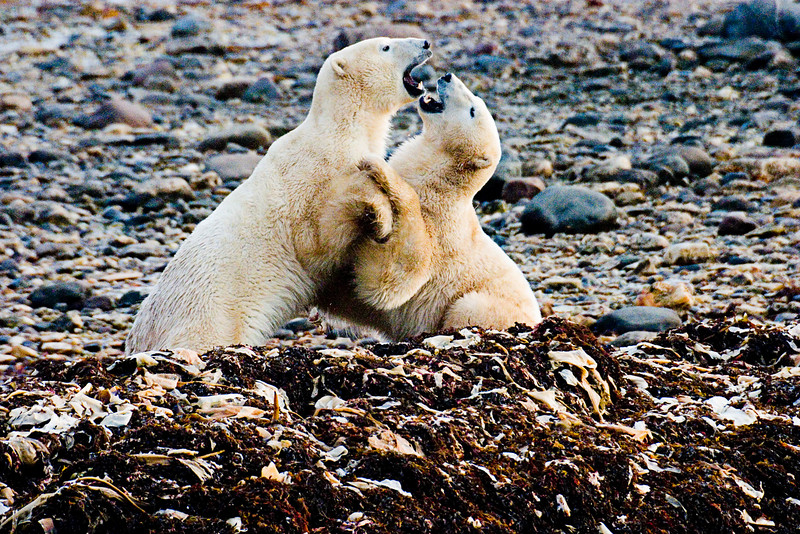 <center>Power Move  <br><br>Churchill, Manitoba, Canada</center>