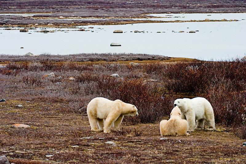 <center>The Three Bears  <br><br>Churchill, Manitoba, Canada</center>