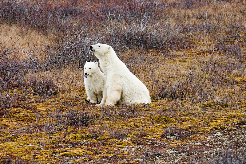 <center>Family Portrait  <br><br>Churchill, Manitoba, Canada</center>