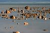 <center>Rocky Coast  <br><br>Churchill, Manitoba, Canada</center>