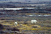 <center>Family On the Tundra  <br><br>Churchill, Manitoba, Canada</center>