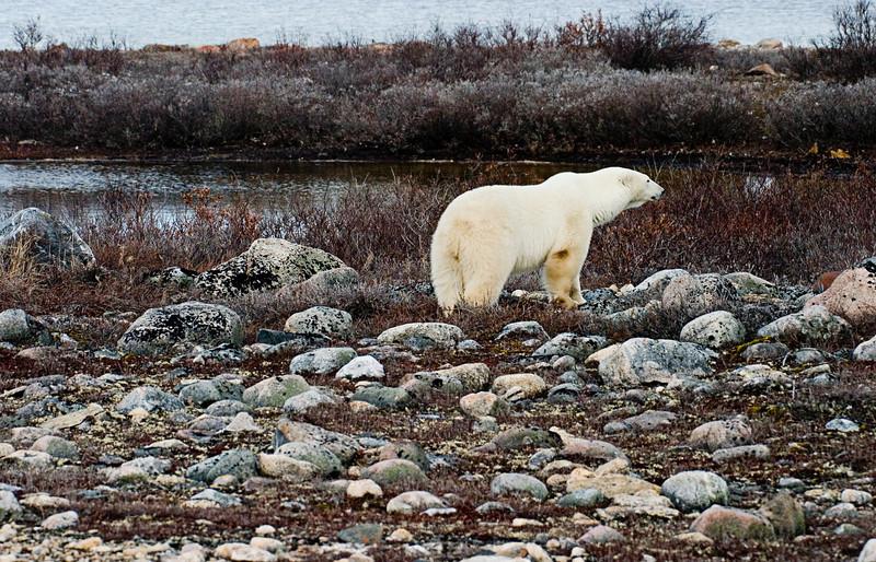 <center>Rocky Tundra  <br><br>Churchill, Manitoba, Canada</center>