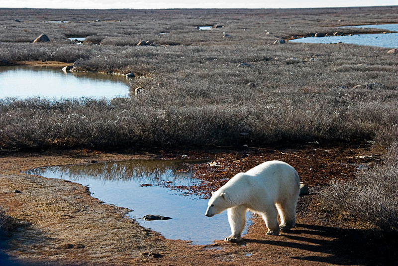 <center>Avoiding the Water  <br><br>Churchill, Manitoba, Canada</center>