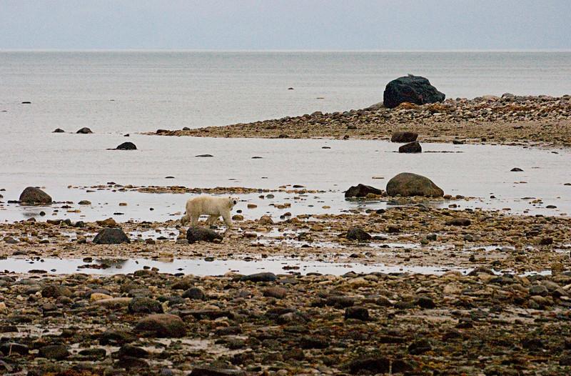 <center>Low Tide  <br><br>Churchill, Manitoba, Canada</center>