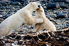 <center>Playing Around  <br><br>Churchill, Manitoba, Canada</center>