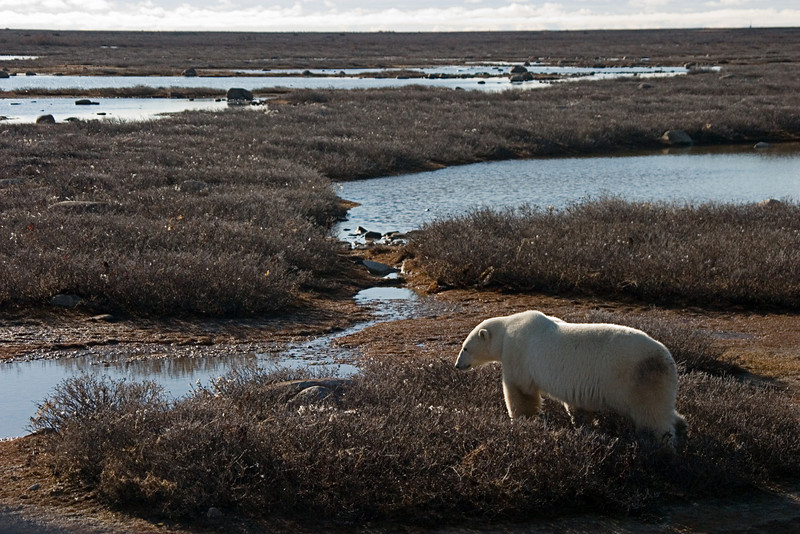 <center>Late Afternoon  <br><br>Churchill, Manitoba, Canada</center>