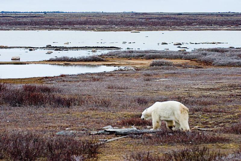 <center>Outcast  <br><br>Churchill, Manitoba, Canada</center>