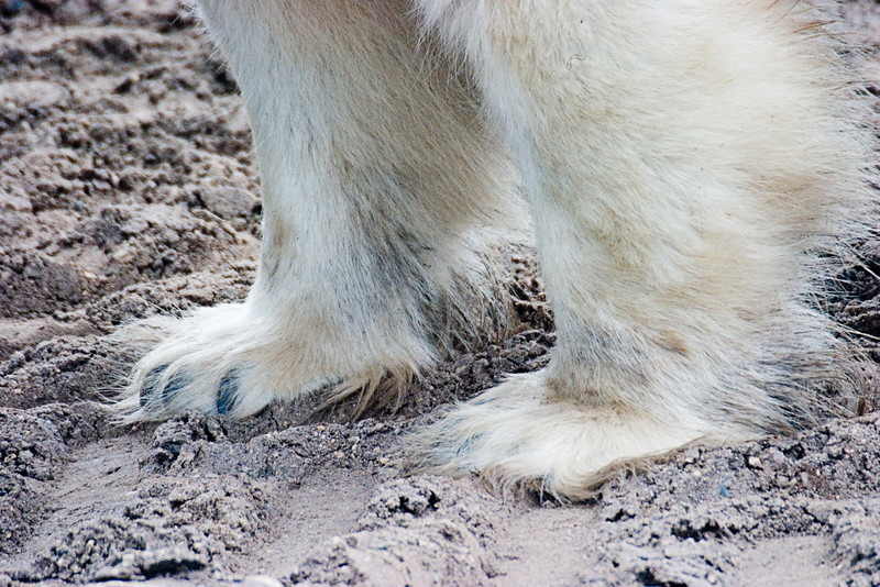 <center>Paws  <br><br>Churchill, Manitoba, Canada</center>