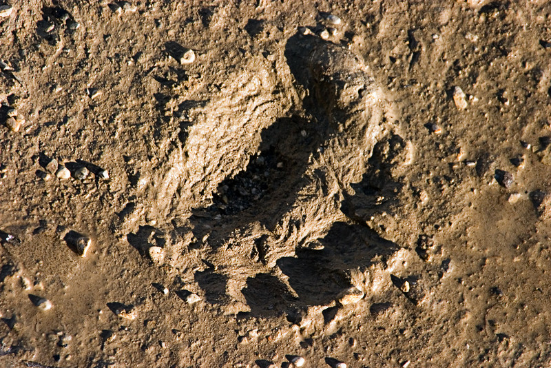 <center>Bear Prints  <br><br>Churchill, Manitoba, Canada</center>