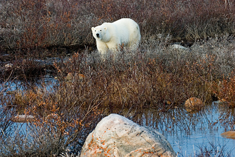 <center>Checking us Out  <br><br>Churchill, Manitoba, Canada</center>