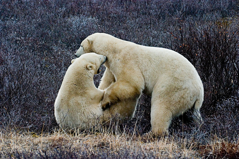 <center>Takedown  <br><br>Churchill, Manitoba, Canada</center>