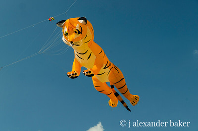Tiger Kite, Newport, RI