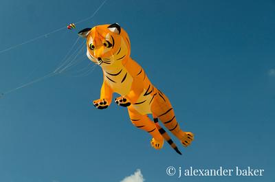 Tiger Kite, Newport, RI