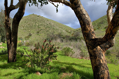 North County Hills and Trees