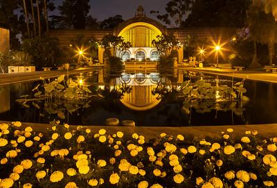 Balboa Park Botanical Garden in the reflecting pool.