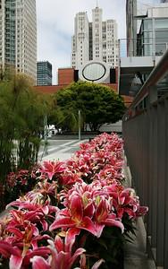 San Francisco MOMA