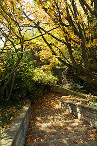 Stairs in the Autumn