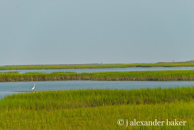 Salt Marsh, Murrell's Inlet, SC