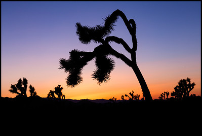 Sunset, Joshua Tree NP