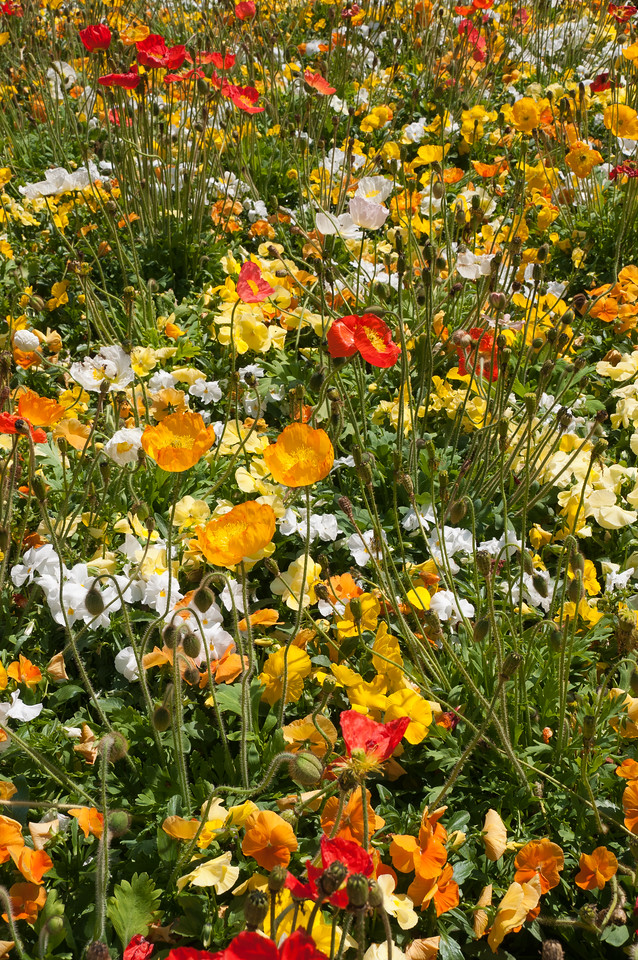 Beautiful flora in Fort Worth Botanic Garden in Texas
