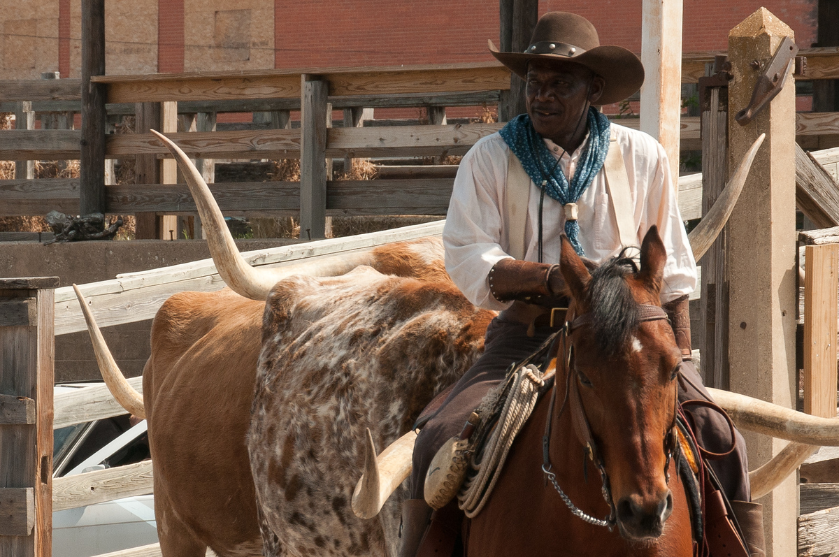 Cowboy during cattle drive in the Stockyards of Fort Worth, Texas