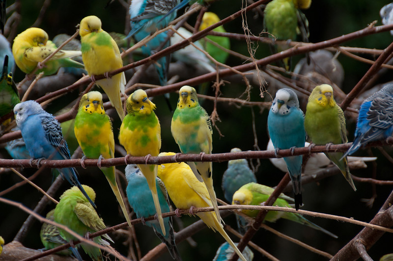 Colorful parrots in the Fort Worth Zoo in Texas