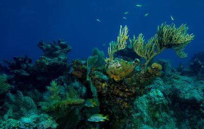 Nearing Nemo