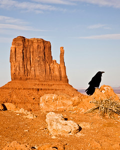 Even the Ravens admire the view with the setting sun