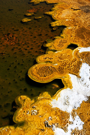 Pool at Upper Geyser Basin