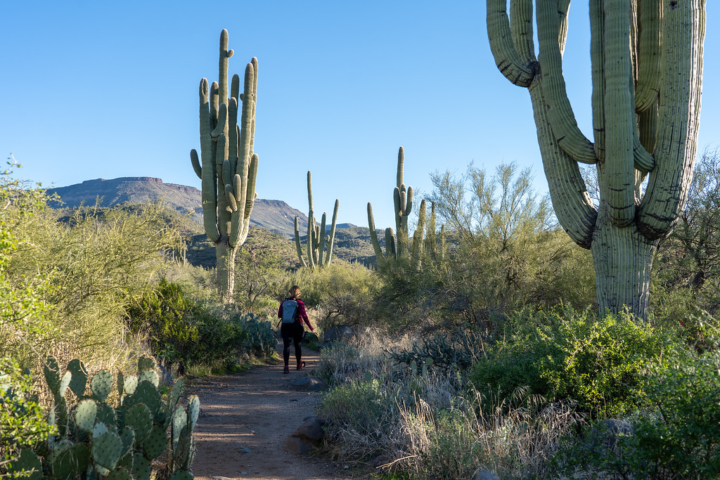 Hiking the Metate Trail