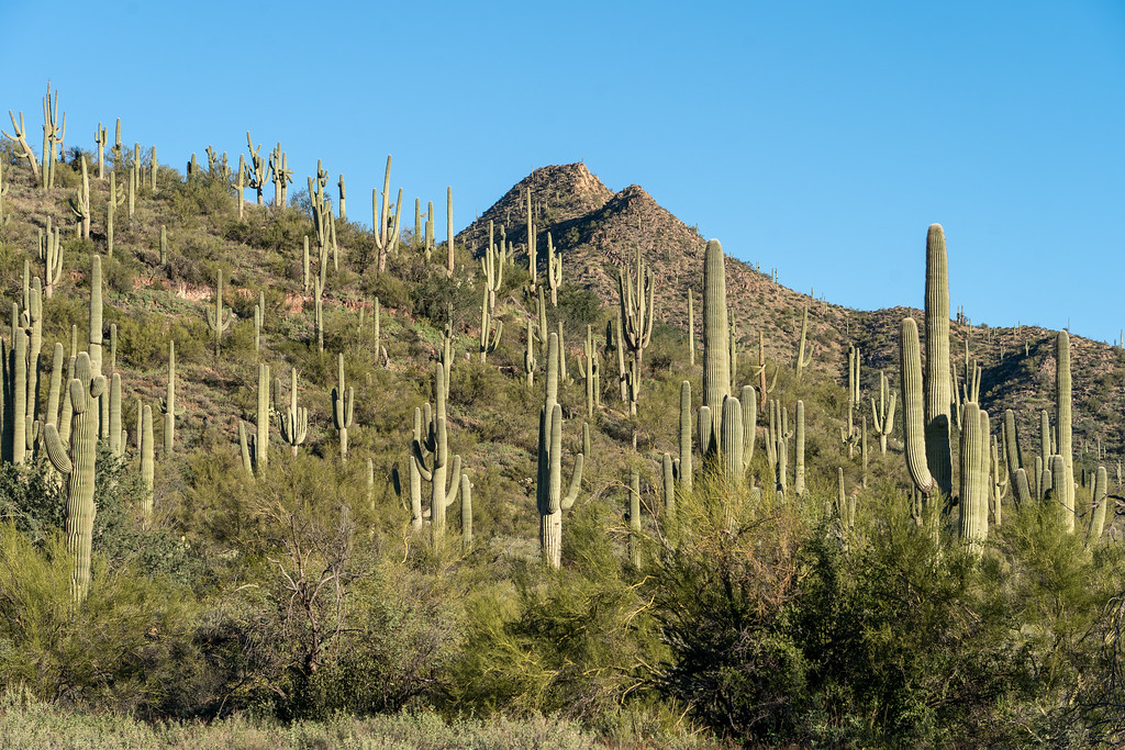 Sonoran Desert in Arizona