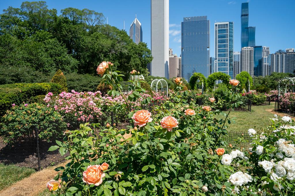 North Rose Garden in Chicago