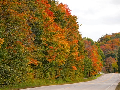 Fall colors in Cedar, Michigan