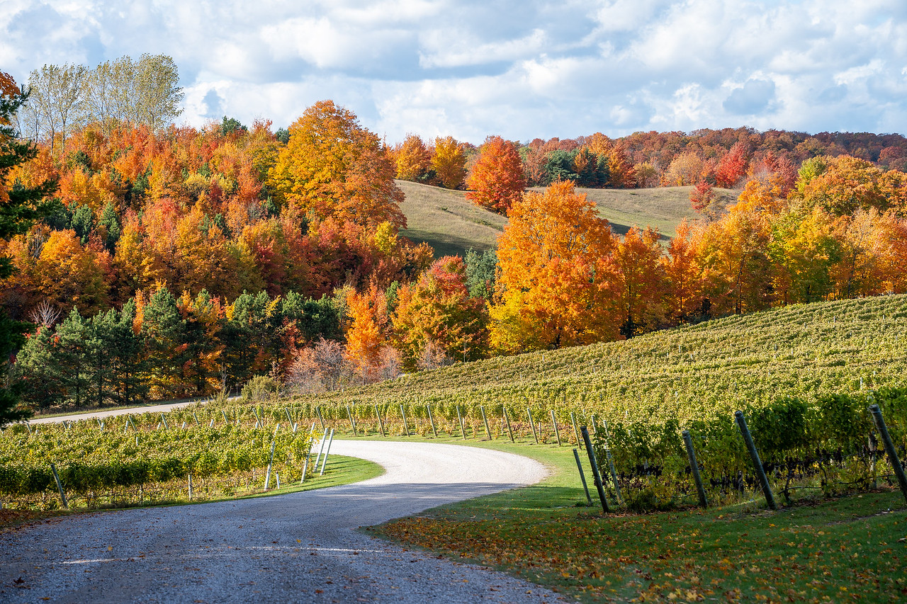 Driveway view at Blustone Vineyards in Michigan