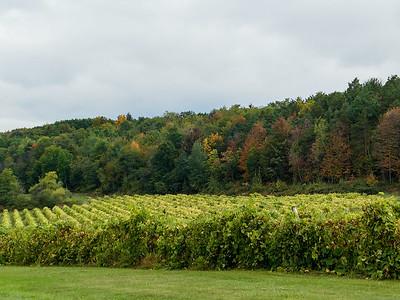 Vineyard in the Finger Lakes