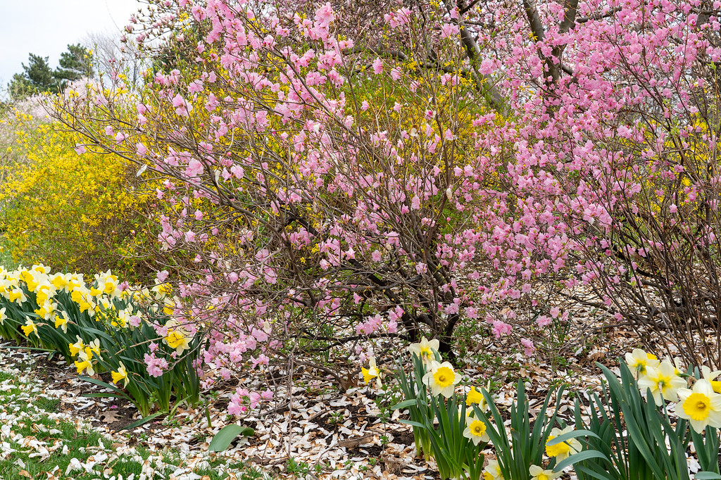 Lake View Cemetery blooms