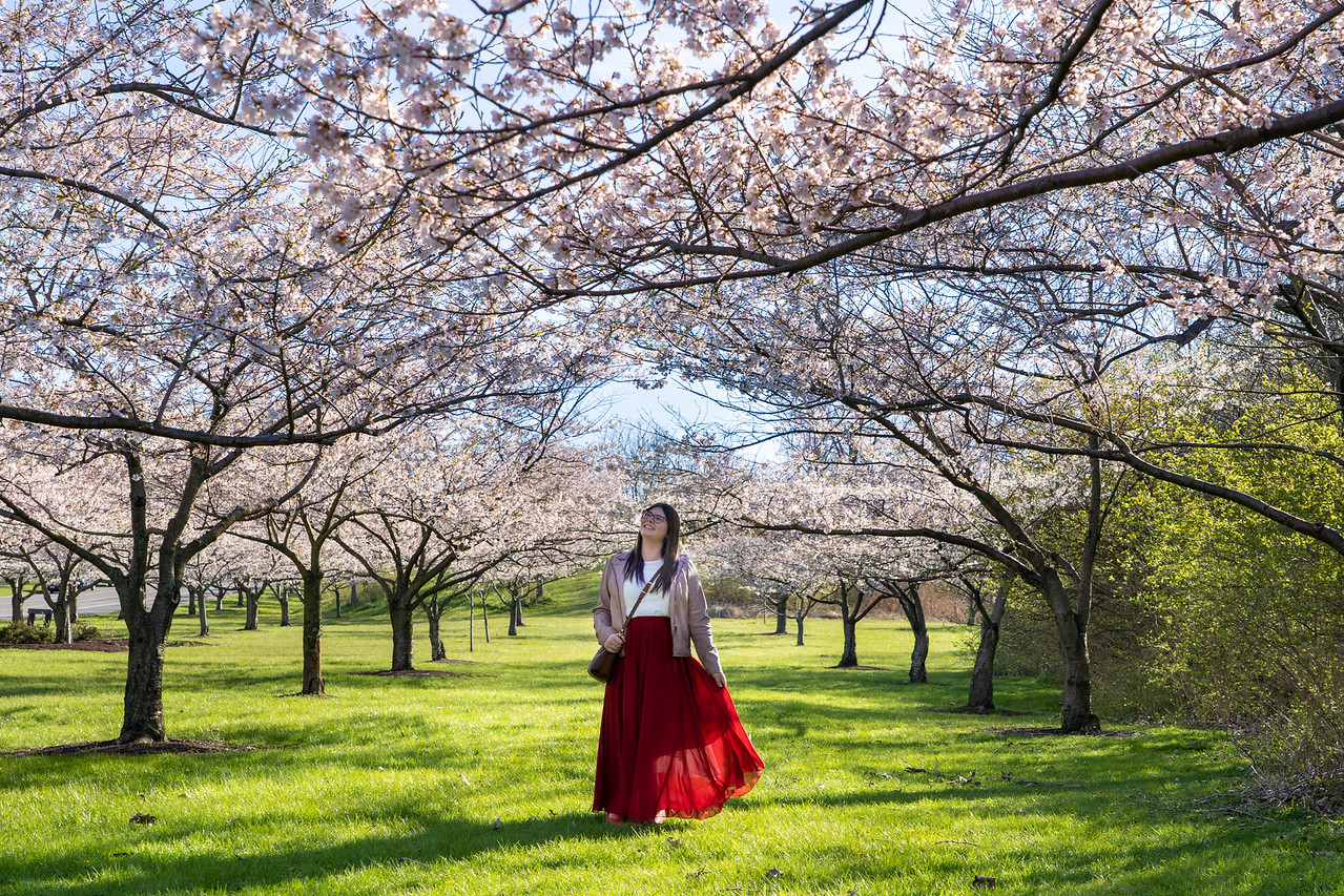 Amanda under cherry blossoms at Brookside Reservation in Ohio