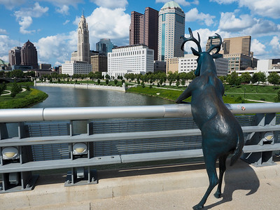 Deer on Rich St. Bridge in Columbus