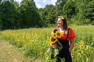 Sunflower picking at Greenfield Berry Farm