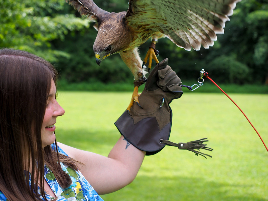 Ohio School of Falconry in Columbus