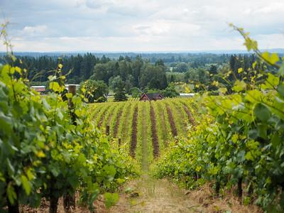 Sokol Blosser Winery in Oregon