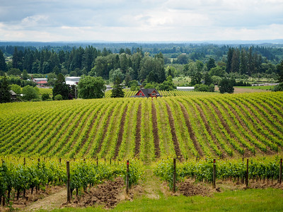 Sokol Blosser Winery in Oregon's Willamette Valley